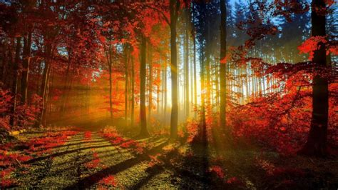 Autumn Red Forest Rays Ultra Hd Wallpaper 3840x2160