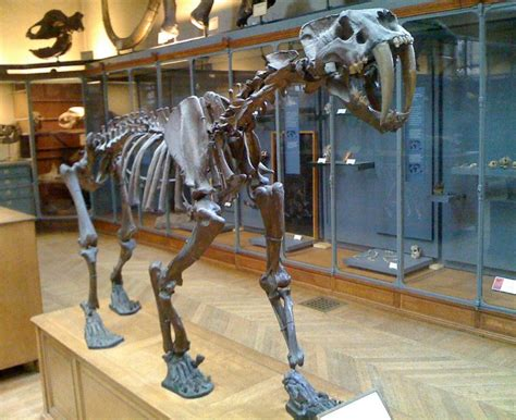Smilodon Facts For Kids & Adults: Prehistoric Animal Info